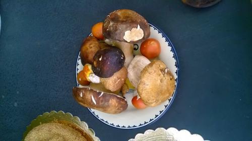 Porcini and ovuli Mushrooms